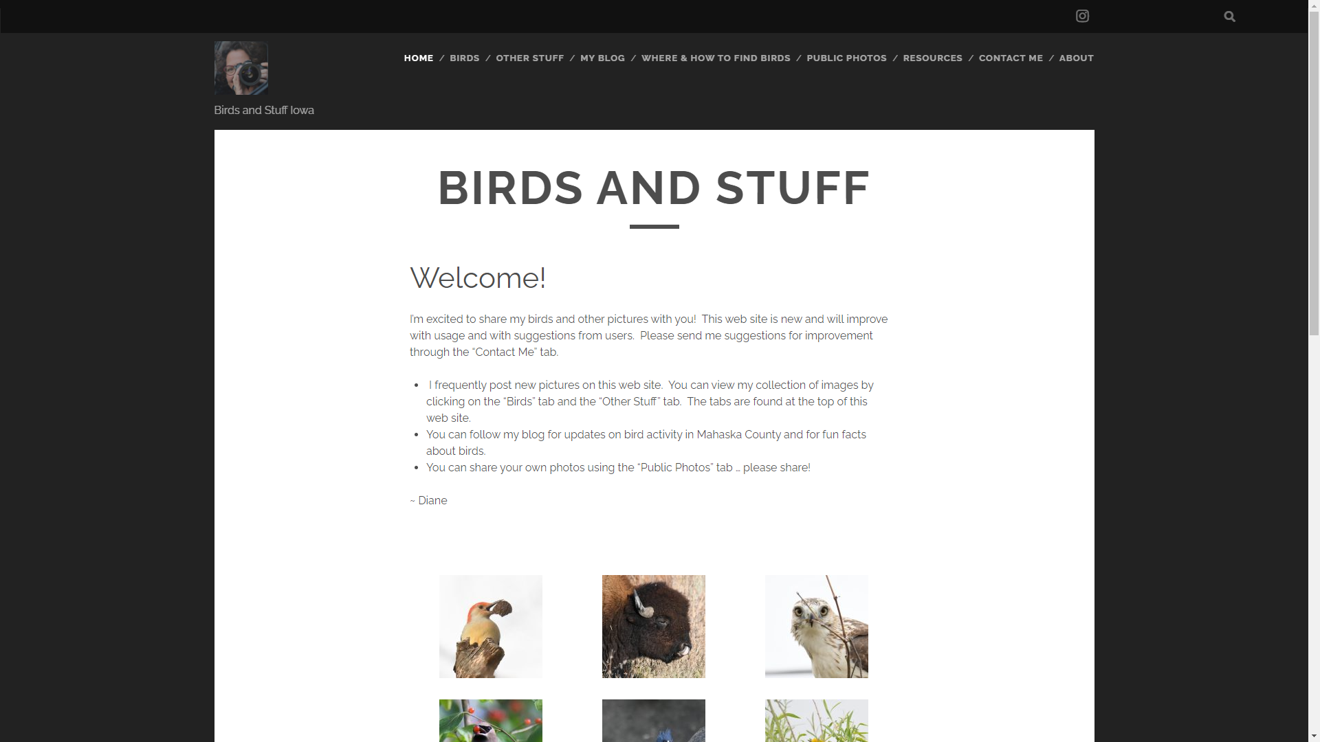 Birds & Stuff